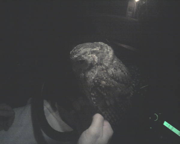 Scott the Owl Whisperer